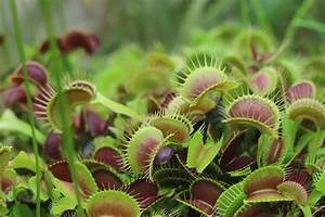 The Beginning of Carnivorous Plant Resource
