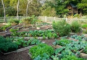 Einfaches Gemüse Für Den Garten : so gelingt die anzucht von gem se aus dem eigenen garten ~ Lizthompson.info Haus und Dekorationen