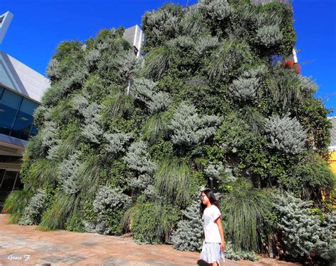 Vertical Garden Perth by Perth Daily Photo Vertical Gardens Tapestries