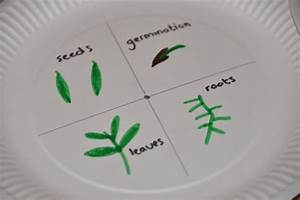 Flowering Plant Life Cycle Plate Spinner