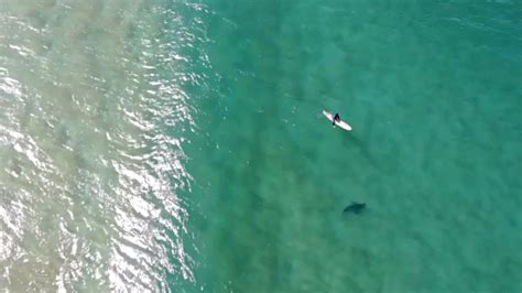 drone pilot  mavic  enterprise  warn surfer  approaching shark