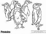 Coloring Monterey Kelp Forest Aquarium Bay Template sketch template