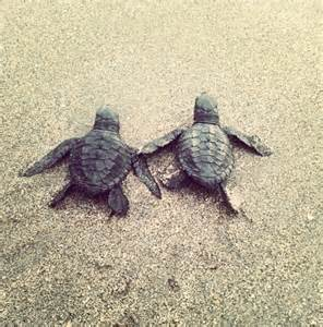 Cute Baby Sea Turtles