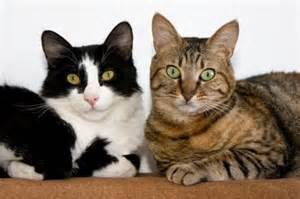 how to make two cats get along cat behavior what to do when your cats fight