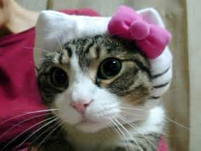 kitty cat kitty cat kitty cat more hello kitty hell