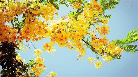 yellow aesthetic desktop wallpapers