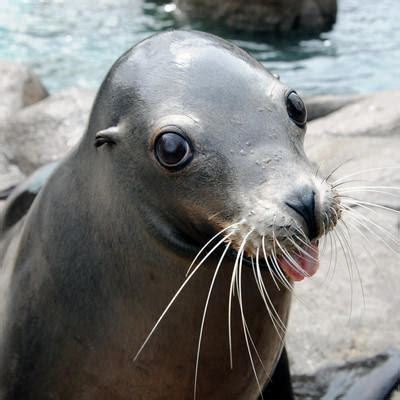 sea lion pool bronx zoo