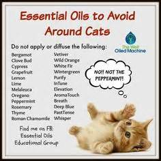 essential oils cats 1000 images about essential oils on