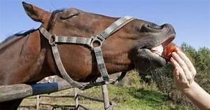 Quanto costa mantenere una cavallo? ~ Quanto Costa