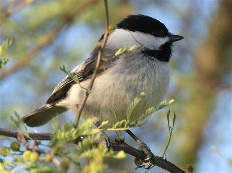 se texas birding wildlife watching hill country trip