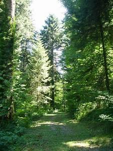 La Route Des Sapins  25    39