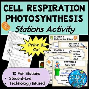 Comparing Photosynthesis  U0026 Cell Respiration Stations