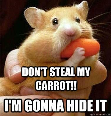 Hamster Memes - 30 most funny hamster meme pictures and photos