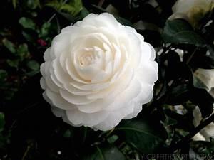 Les Fleurs Paris : les fleurs en hiver lily griffiths art floral paris ~ Voncanada.com Idées de Décoration