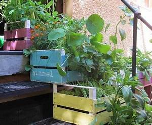 balkon erdbeeren pflanzen krauter salat upcycling With garten planen mit gegen tauben auf dem balkon