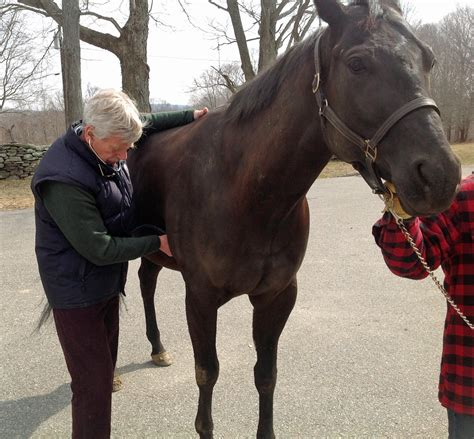 horse signs horses healthy aaep health there sick lame they vary apply sound general lot
