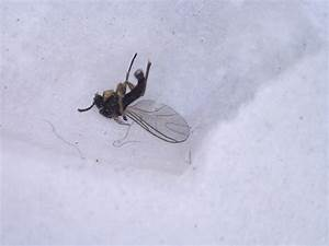 Bugs around my house brian tomasik for Gnat infestation in bathroom