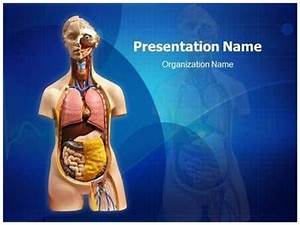 31 best heart powerpoint template heart powerpoint With anatomy ppt templates free download