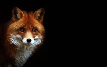 Fox Desktop 4k Wallpapers