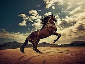 Wild Horses Grouped HD Wallpapers | Beautiful Wild & Pets ...  Wild