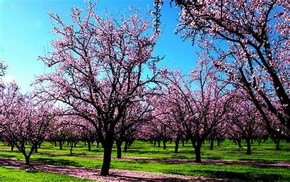 Spring Wallpapers Tree Flowers Flower Awesome 3d