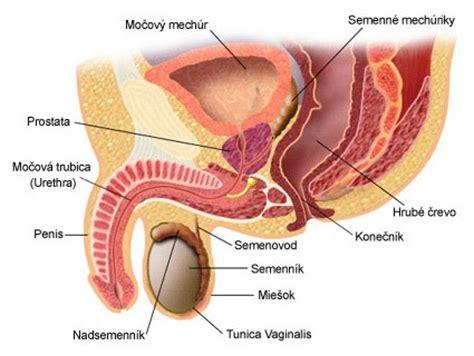Rakovina penisu