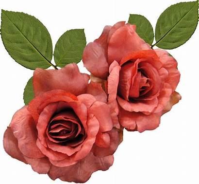 Rose Flower Roses Desktop Orange Watercolor Google