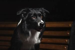 Can Dogs See In The Dark? - Pet Care Facts