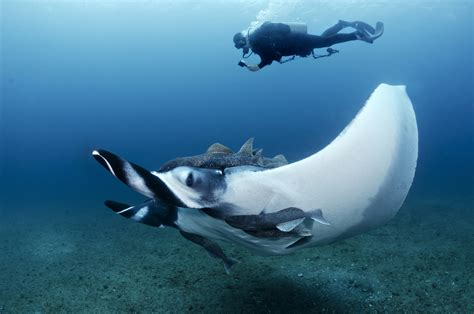 Dive Travel - Mozambique & South Africa