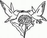 Coloring Hummingbird Bird Humming Printable Hummingbirds Sunflower Sketch Animal Popular Rocks Sketchite sketch template