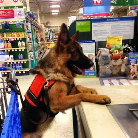 service dog certificate  florida writings