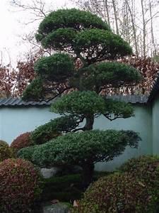 Kleine Bäume Für Vorgarten : japanischer garten b ume ~ Michelbontemps.com Haus und Dekorationen