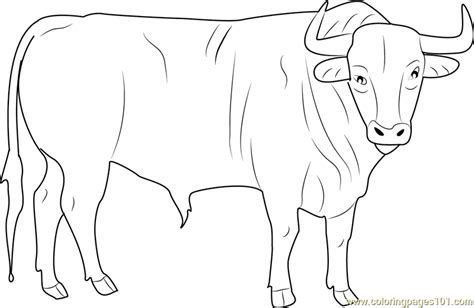 black bull coloring page  bull coloring pages coloringpagescom