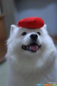 Show-Me Pictures of Cute Dogs Puppies