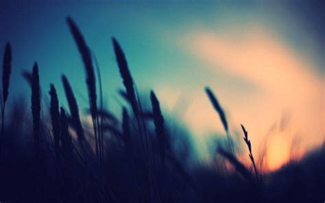 photography nature plants blurred sunset depth