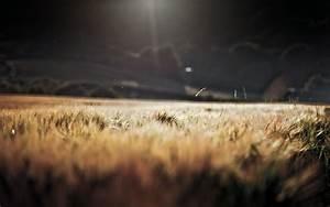 Field of Wheat in Storm Dark Light wallpapers | Field of ...