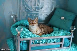 cat hotel inside the ings luxury cat hotel costing owners up to 163 60