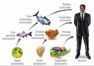 what do you understand by food web?prepare a food web of ...