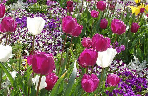 Tulpen Pflanzen Balkon by Welche Sind Die Beliebtesten Fr 252 Hjahrsbl 252 Ratgeber