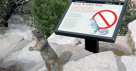ground squirrel solutions do not feed the ground squirrels