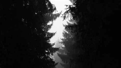 ni wood tree simple nature bw dark wallpaper