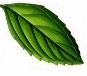 Mint Leaf Clip Art at Clker.com - vector clip art online ...