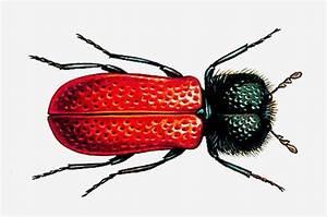 Insecte Qui Mange Le Bois : encyclop die larousse en ligne xylophage grec ~ Farleysfitness.com Idées de Décoration