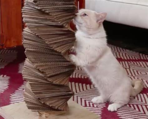 repulsif pour chat exterieur faire soi meme comment fabriquer soi m 234 me arbre 224 chat pour qu il puisse faire ses griffes des id 233 es
