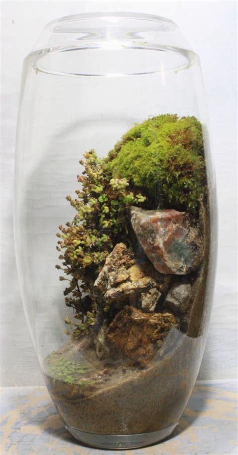 small terrarium plants 214 best terrariums images on pinterest succulents miniature gardens and small gardens