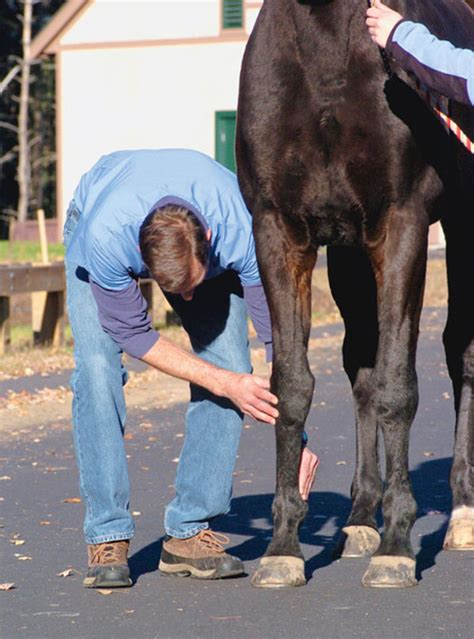 lameness equine exam veterinarian horse leg swelling horses side heat often comparing palpate unusual length each any behind equisearch