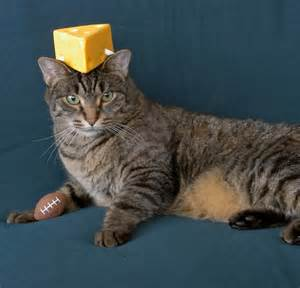 cheese rox 187 archive 187 cheeseheads on my cats