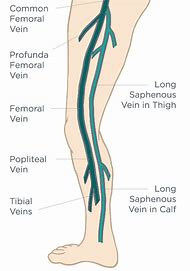 Best Femoral Vein - ideas and images on Bing | Find what you\'ll love