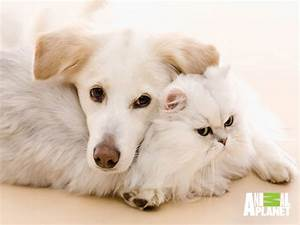 Cute Cat And Dog Together Hd Wallpapers Dogs Cats - Litle Pups