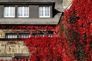 Wilder Wein Vermehren : wilder wein ein steckbrief ~ Orissabook.com Haus und Dekorationen